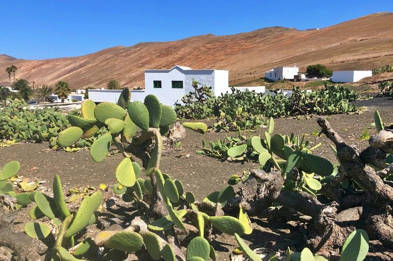 In den Bergen von Lanzarote beim Landausflug Lanzarote auf eigene Faust